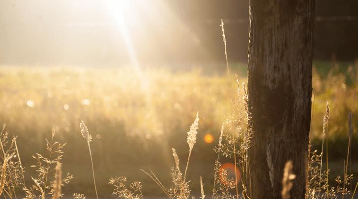 mm_field-summer-sun-meadow