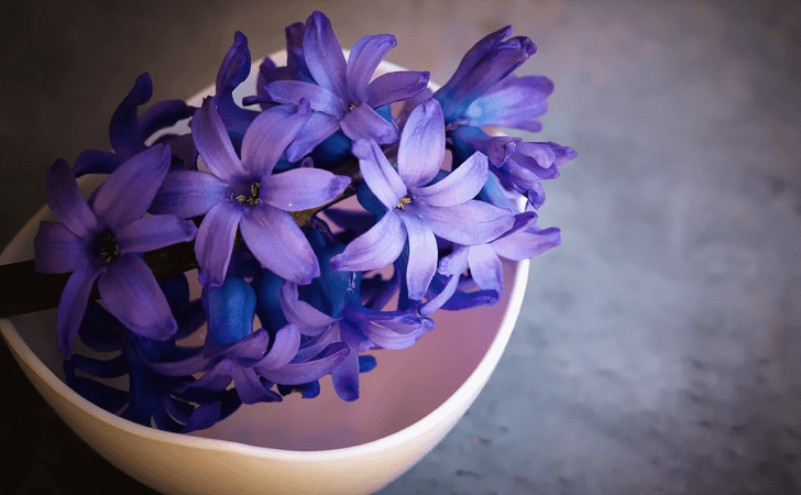 hyacinth-1403653_1920
