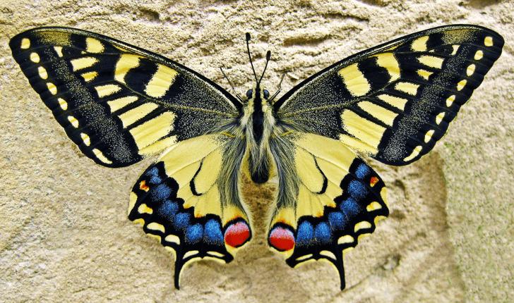 m_butterfly_20160515