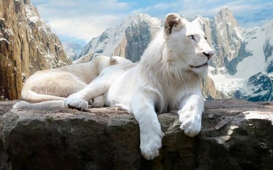 White-Lion-600x375-min