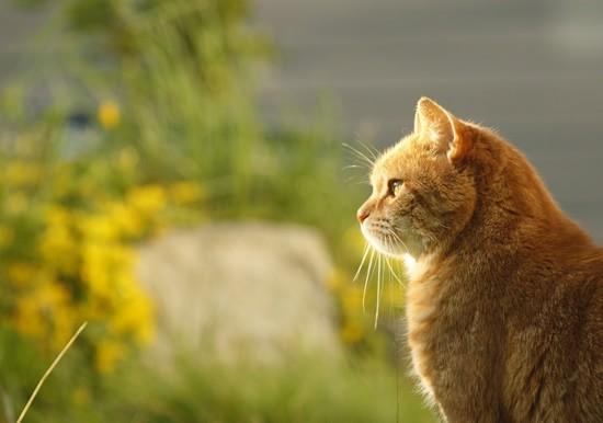cat-318766_1280-min