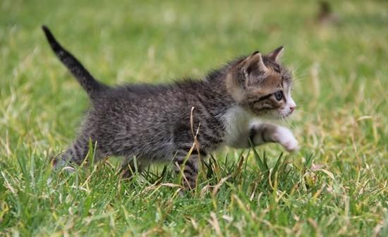 kitten-487641_1280-min