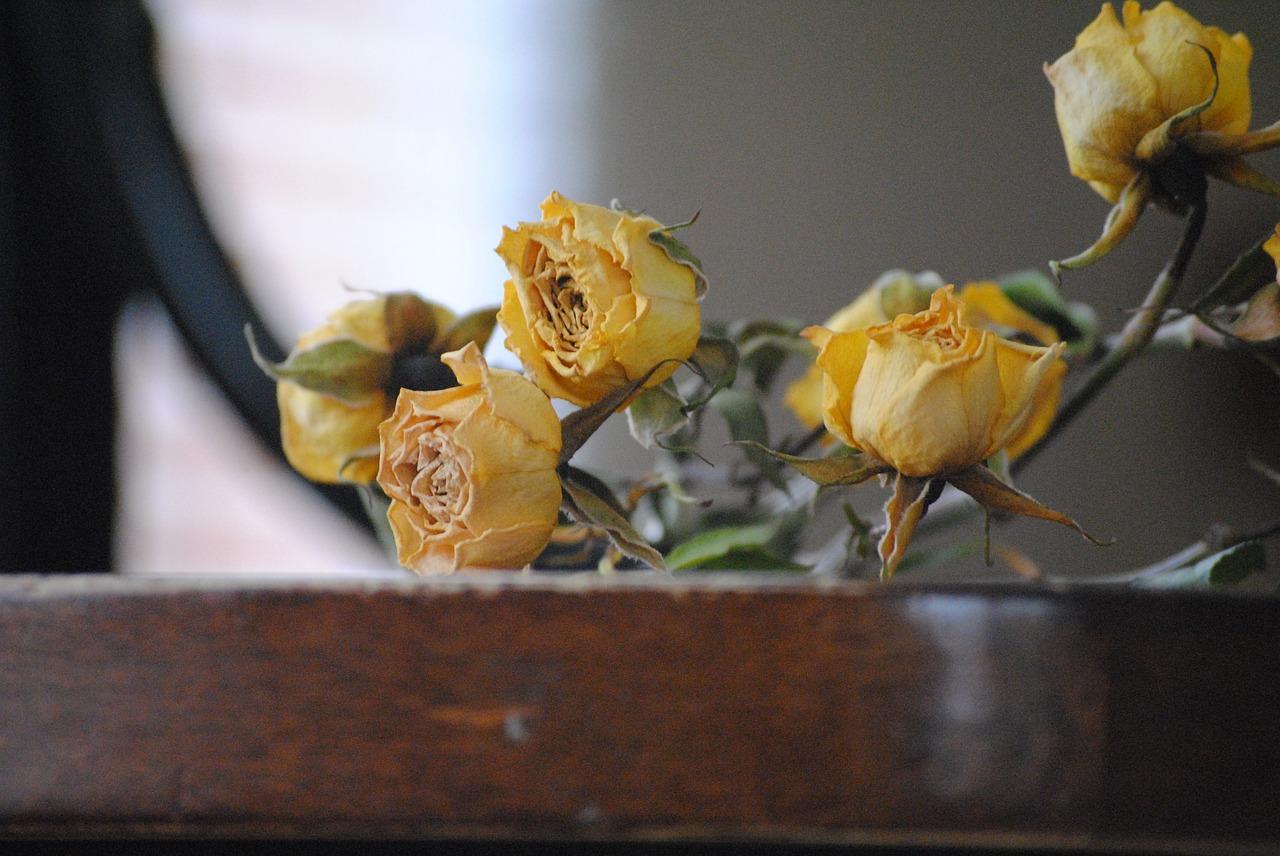 rose-666574_1280