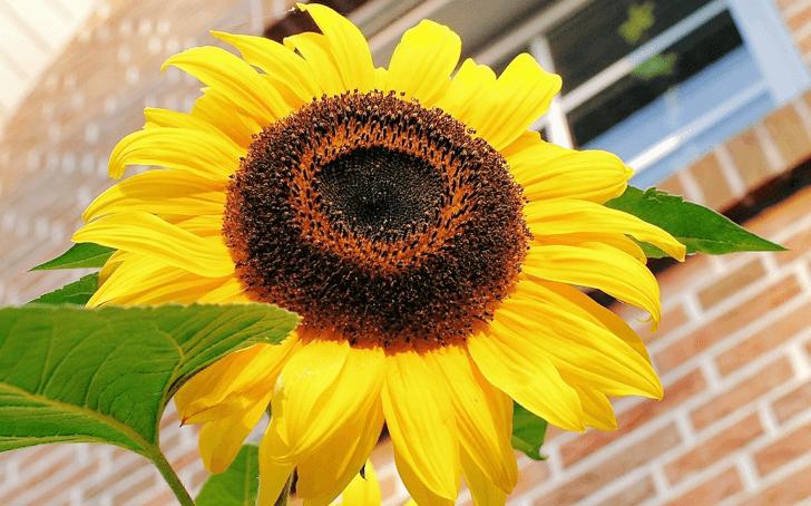 sun-flowermoney-451325_1280-2