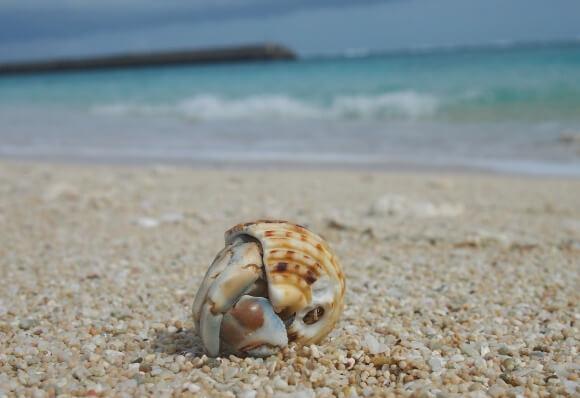 hermit-crab-760725_1280