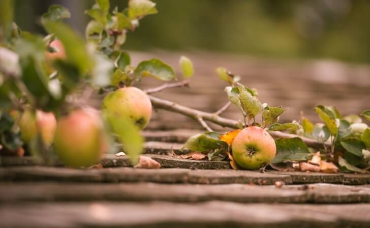 Ripe Apple On Rooftop During Autumn Harvest