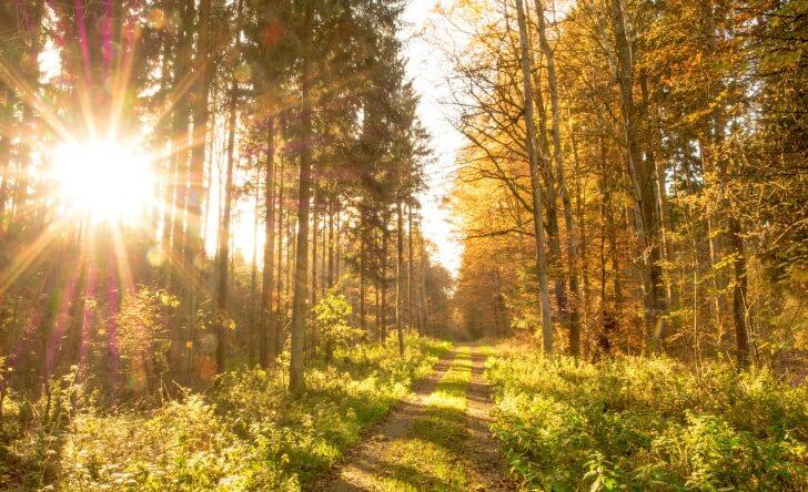 autumn-513783_1920