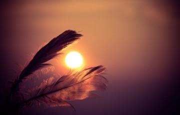 sunset-feathers_20151230 2