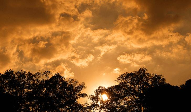 tree_woods_00036