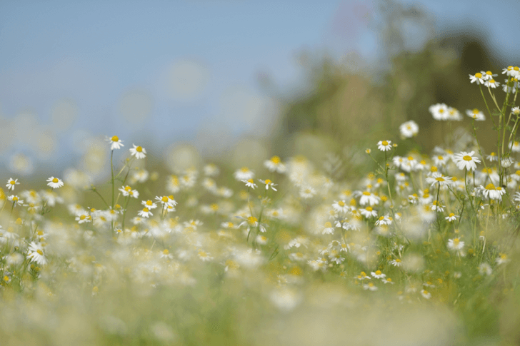 momone_nature-field-flowers-grass