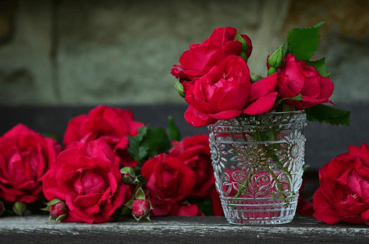 momone_roses-821705_1920