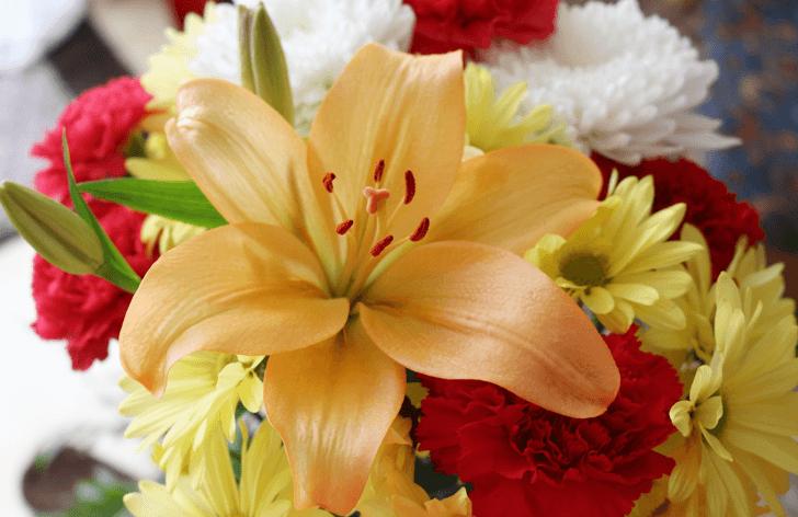 mo_flower-952477_1920