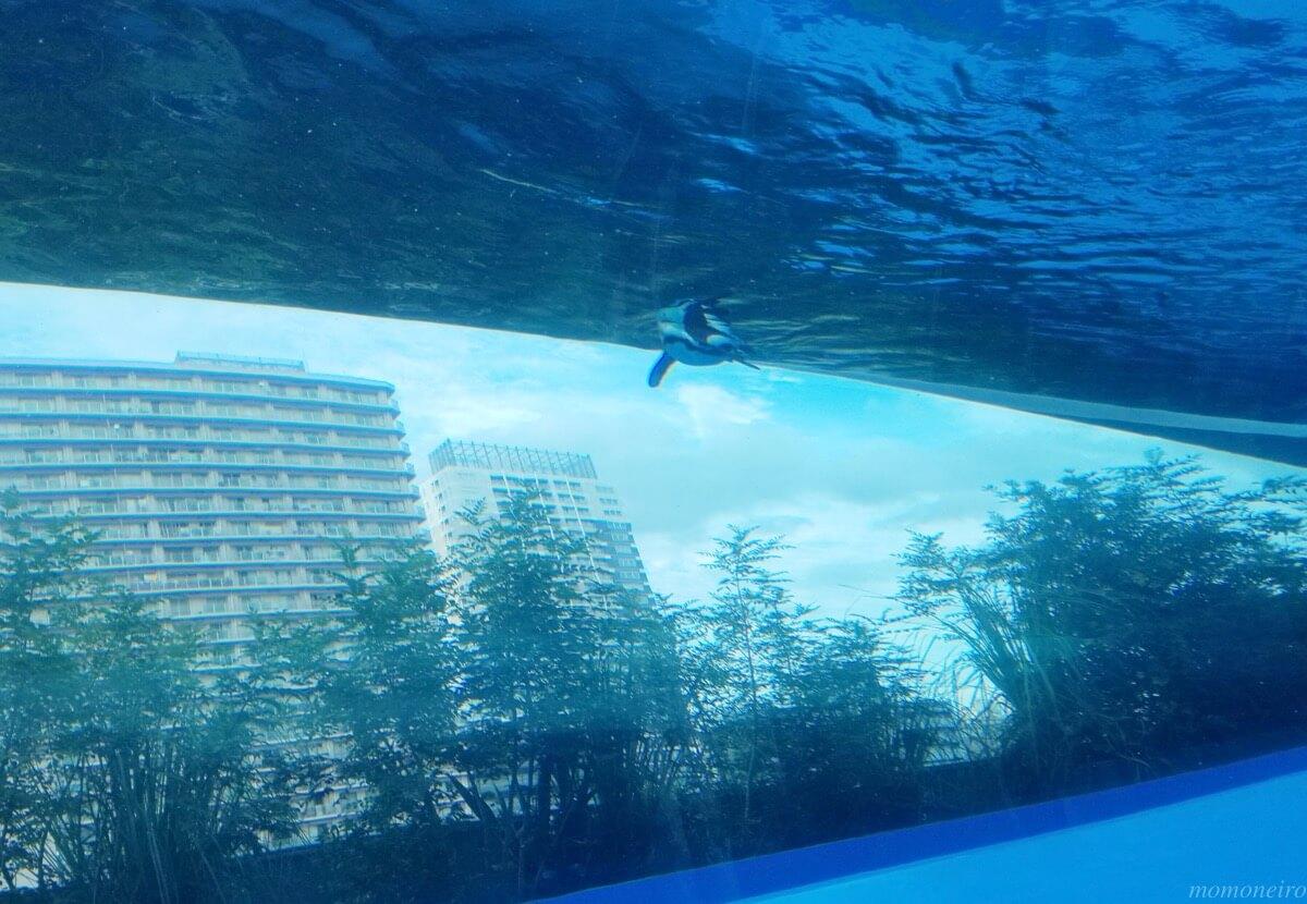 サンシャイン水族館 割引 セゾンカード