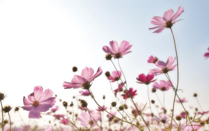 mm_flower_20161022
