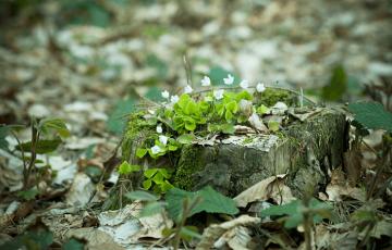 okane_forest-1333233_1920