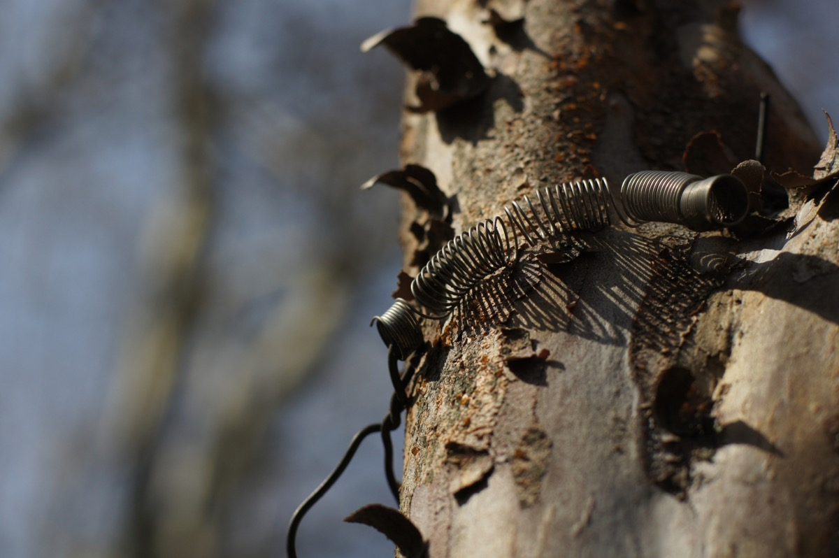 バネが巻いてある木