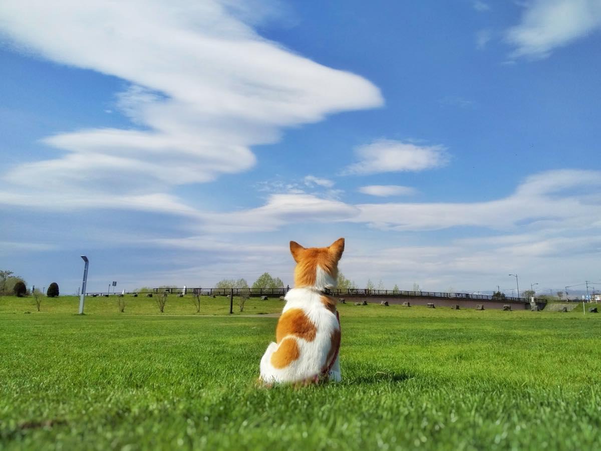景色を眺めている犬