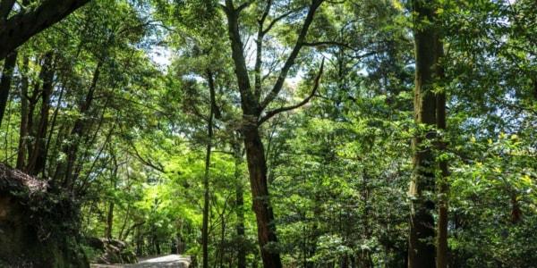 森の中の景色