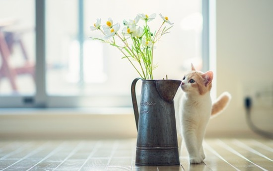 Cat-and-Flowers-Vase-600x375