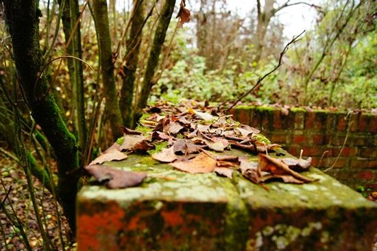 autumn-204560_1280