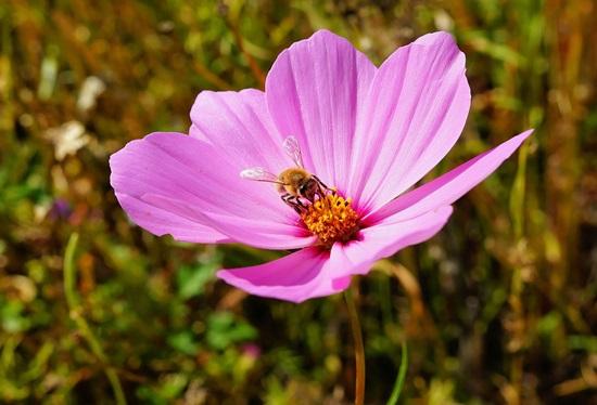 flower-409178_1280