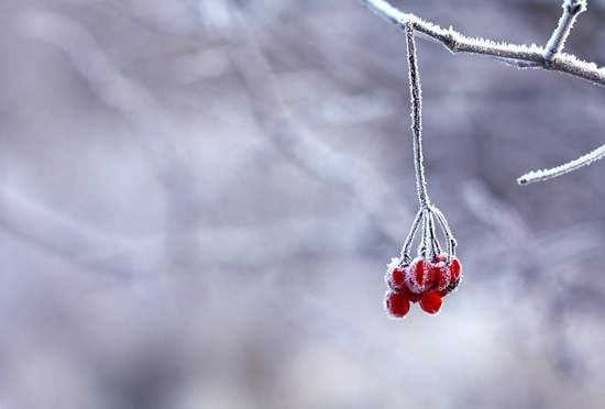 frozen-201495_1280-min