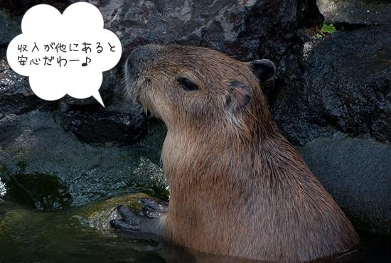 kapibara_anshinkan
