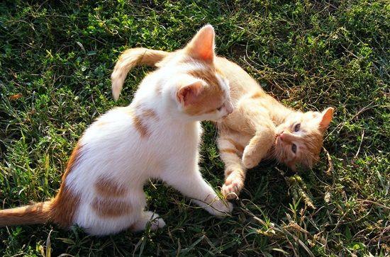 kittens-88517_1280-min