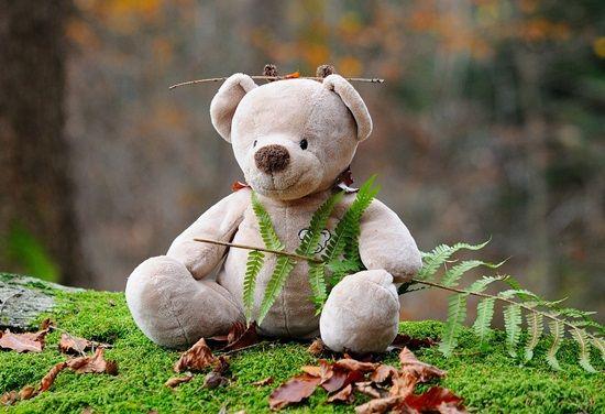 teddy-bear-524251_1280-min