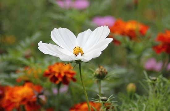 white-blossom-184571_1280-min